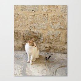 Summertime Cat  Canvas Print