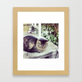 stray 1 Framed Art Print