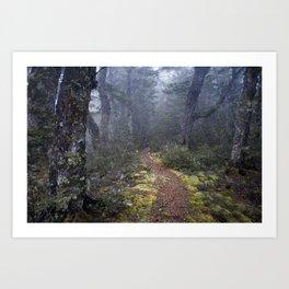 Misty Morning Art Print