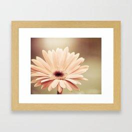 Peach Daisy Flower Photography, Brown Nature Floral Botanical Photo Framed Art Print
