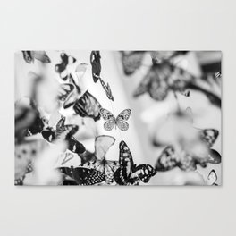 Butterfly papillons Canvas Print