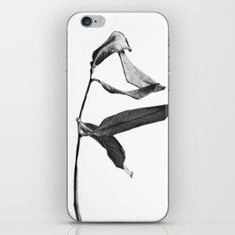 WABI SABI Dead Leaves. iPhone Skin