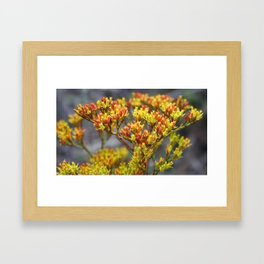 Tx Wildflower Framed Art Print