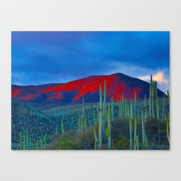 Green Cactus Field In The Desert With Red Mountains Blue Grey Sky Landscape Photography Canvas Print