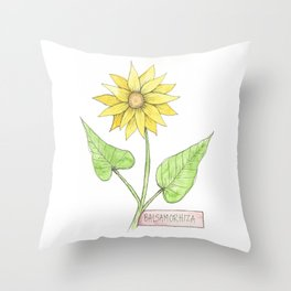 balsam root botanical illustration Throw Pillow