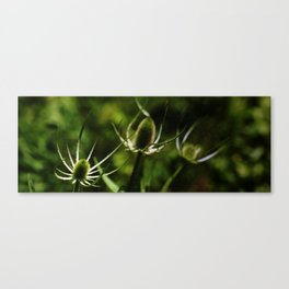 Natural Spikes Canvas Print