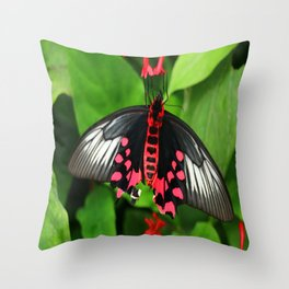 Batwing  Butterfly Throw Pillow