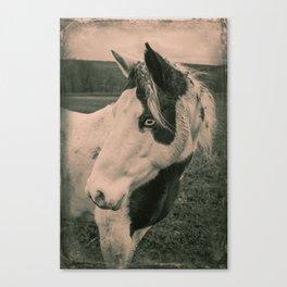 Blue Eyed Beauty- Monochrome Canvas Print