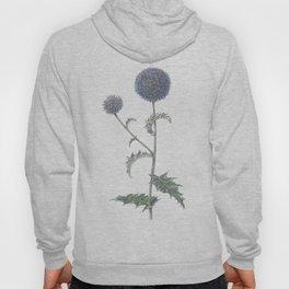 Botanical illustration 2 Hoody