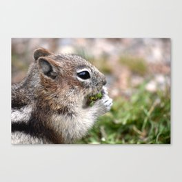 ground squirel having a snack Canvas Print