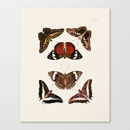 Vintage Butterfly Chart III Canvas Print