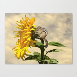 Waiting for the Sunflower Canvas Print