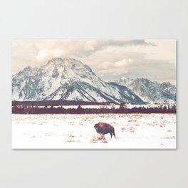 Bison & Tetons Canvas Print