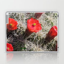 A Hedgehog Cactus Looks Sunward Laptop & iPad Skin