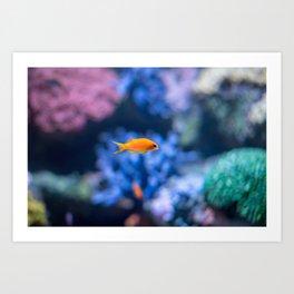 Orange Fish Art Print