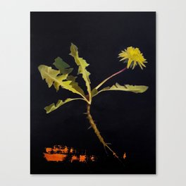 Transitioning Canvas Print