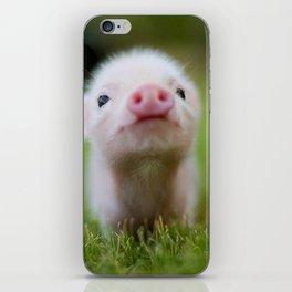 Little Pig iPhone Skin
