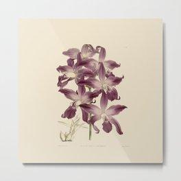 R. Warner & B.S. Williams - The Orchid Album - vol 01 - plate 049 Metal Print