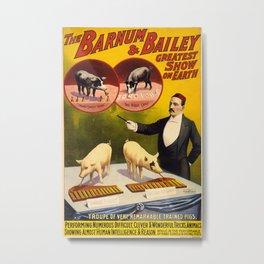 Vintage poster - Trained pigs Metal Print