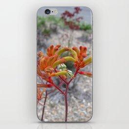 Orange Kangaroo Paw Flowers iPhone Skin
