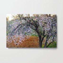 """""""Flowering Almond"""". At Sunset Metal Print"""
