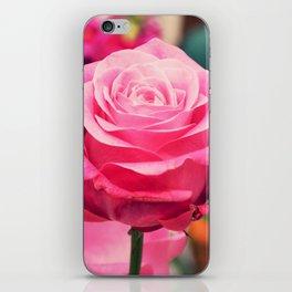 Elegant pink rose iPhone Skin