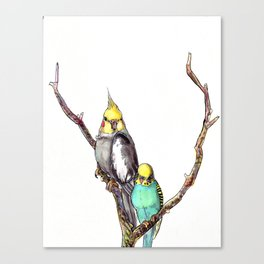 Budgie and Tiel Canvas Print