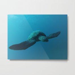 Sea Turtle Encounter Metal Print