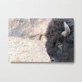 Bison Drive By Metal Print