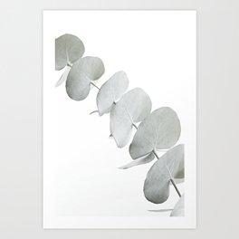 EUCALYPTUS WHITE 3 Art Print