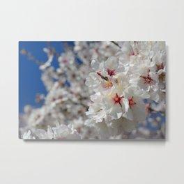 """""""White spring"""". Metal Print"""