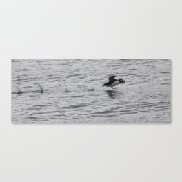 Puffin Takes Off Canvas Print
