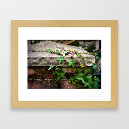 Vine on Stone Framed Art Print