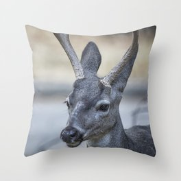 Buck with Two Pronged Antlers Throw Pillow