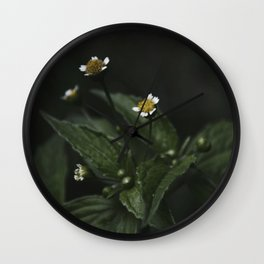 Botanical Still Life Chamomile Wall Clock