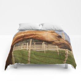 Where Whiz Waylon? Comforters