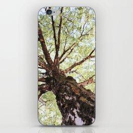 Old Birch in Spring iPhone Skin