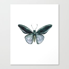 Butterfly - Nature Study #4 Canvas Print