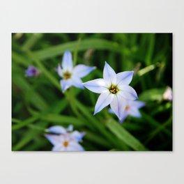 Starflowers Canvas Print