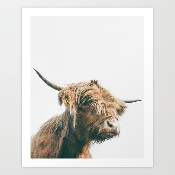 Majestic Highland cow portrait print by Patrik Lovrin Photography