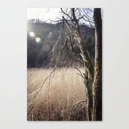 A big leafless tree in a swamp Canvas Print