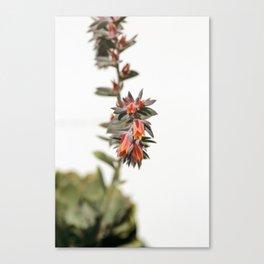 Summer Succulent #1 Canvas Print