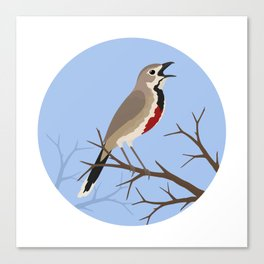 Rosy-patched Bush-shrike Canvas Print