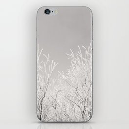 Winter brances iPhone Skin