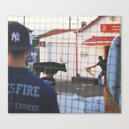 Taunting Canvas Print