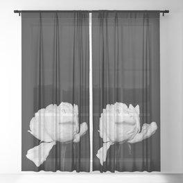 White Peony Black Background Sheer Curtain