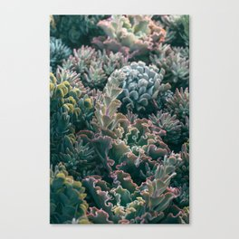 Mornings In The Succulent Garden #1 Canvas Print