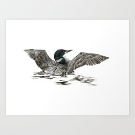 Morning Stretch - Common Loon Art Print