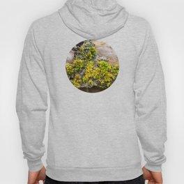 Moss on a Fallen Tree Hoody