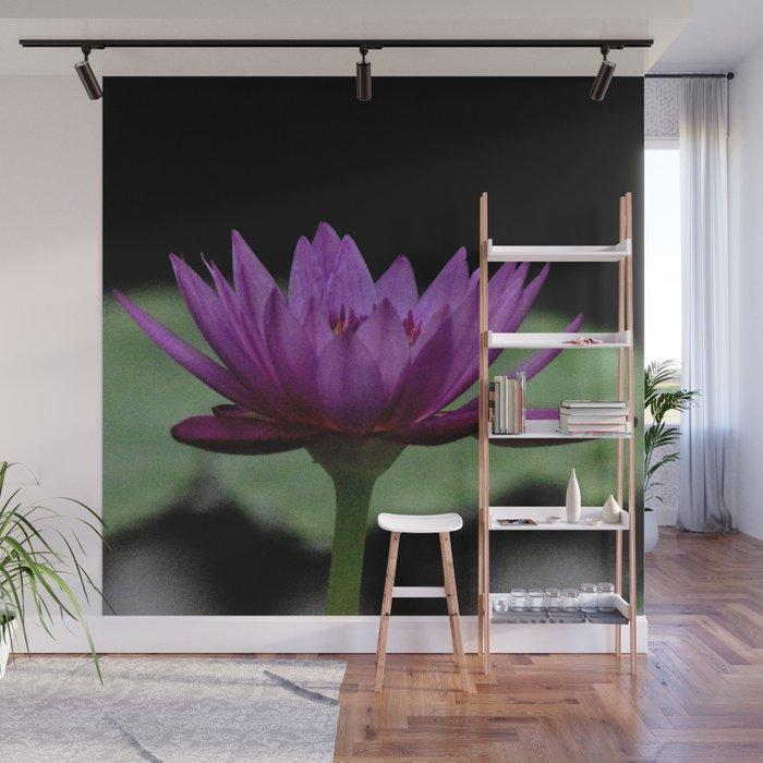 Purple Sacred Lotus Wall Mural